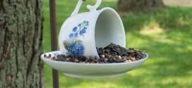 Csészéből madáretető