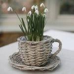 Hóvirág csészében